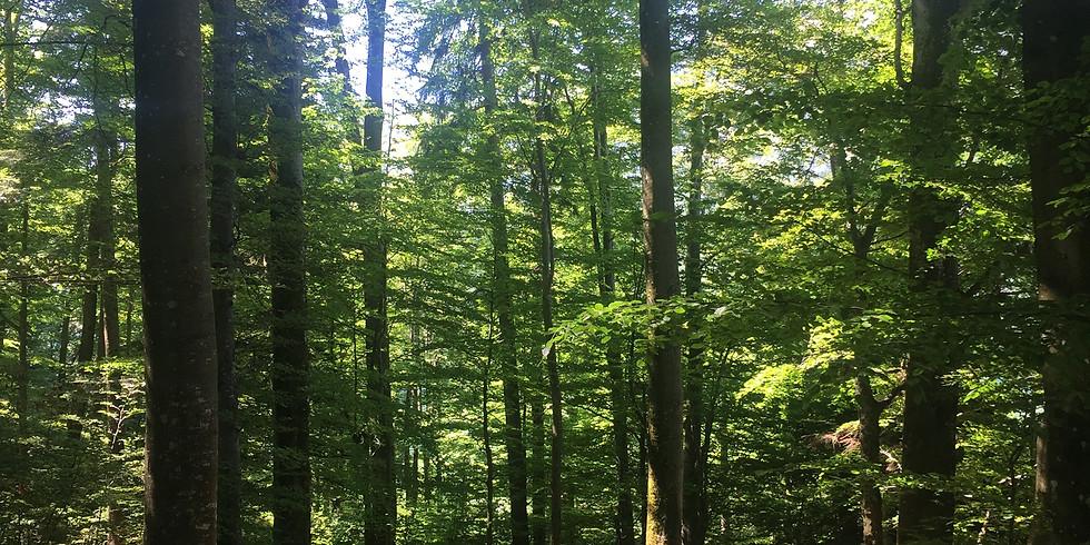Lesní terapie Cibulka