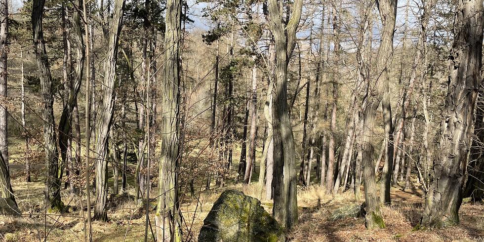 Lesní terapie Šárecké údolí