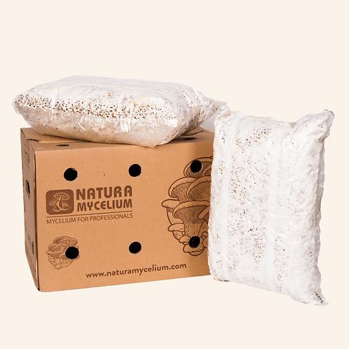 Natura Mycelium Ukrayna İthal İstiridye Mantarı Tohumu (Miseli)