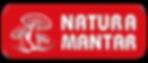 istiridye mantarı natura mantar