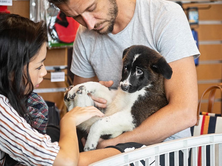 Fostering in Hong Kong: How You Can Help