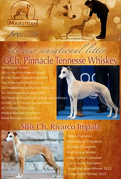 GCh. Pinnacle Tennessee Whiskey  X  SBisCh. Rivarco Impala
