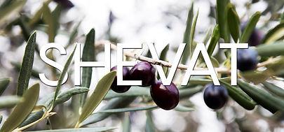 shevat-1024x576.jpg