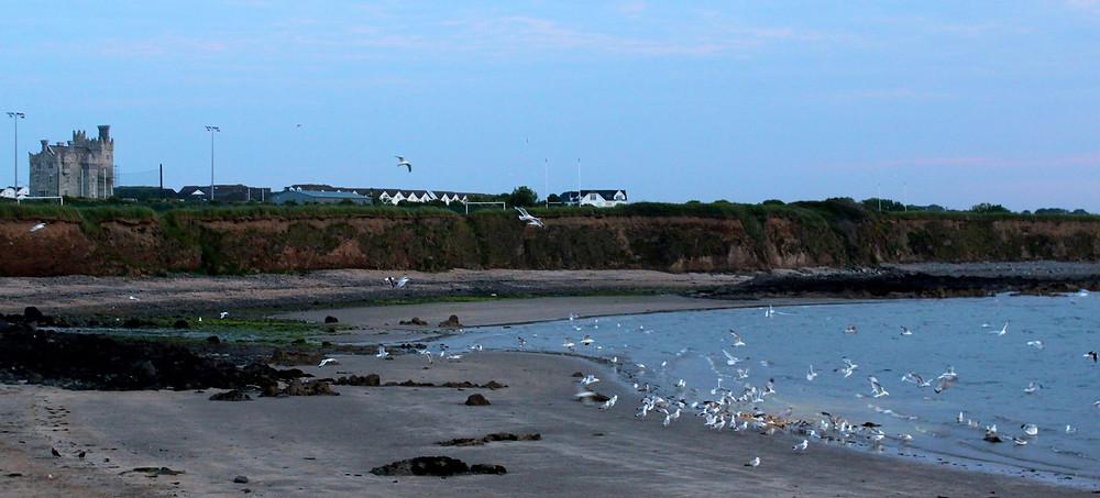Seagulls Balbriggan