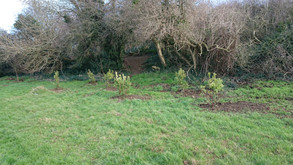 Balrothery's Glebe Park takes shape with 200 new trees planted.