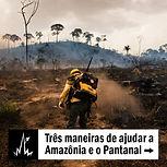 Três maneiras de ajudar a Amazônia e o Pantanal