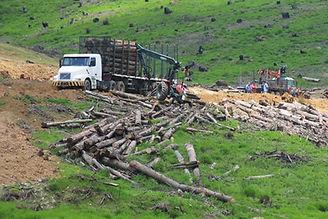 Brasil: pecuária e meio ambiente