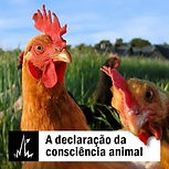 A declaração da consciência animal