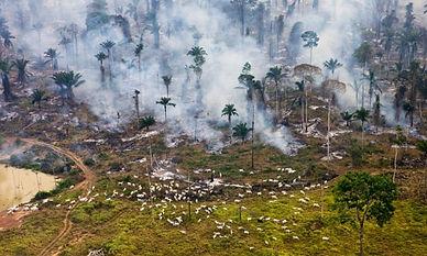 Desmatamento pela pecuária