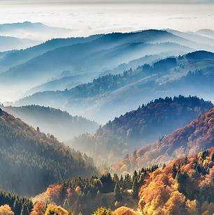 black-forest-region-in-germana85457.webp