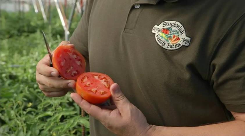 ryan tomato
