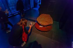 Muséum de Toulouse 2017