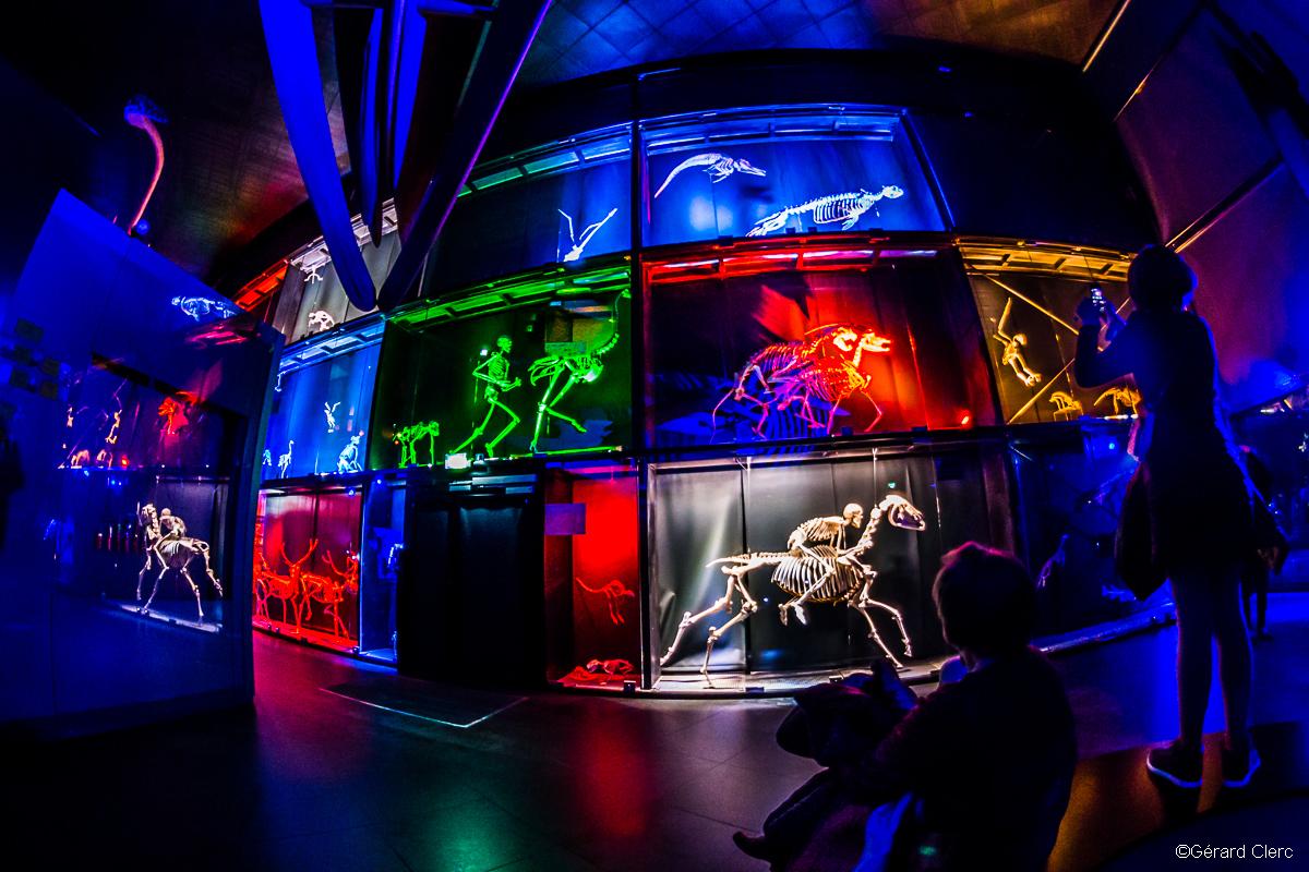 Nuit des Musées - Muséum de Tou