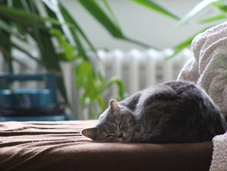 Creating Better Sleep Habits