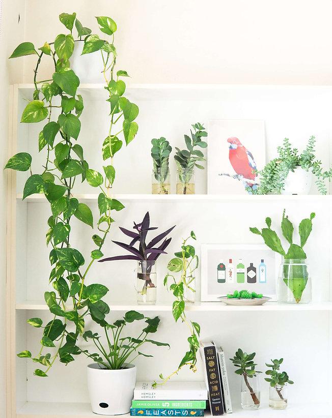 plants_in_vases_bg.jpg