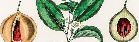 botanical4.jpg