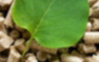 udrzatelna biomasa