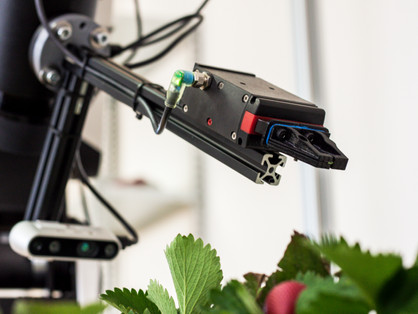 Making strawberry production more profitable by implementing automation