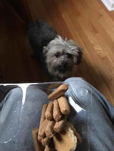 Maizie Getting a Treat!