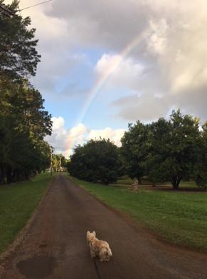 Rainbow and Onuva