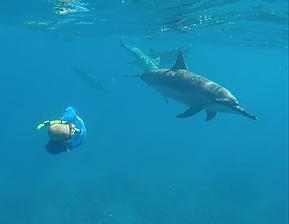 Makara Swimming w Dolphin