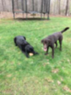 Bella and Beau.JPG