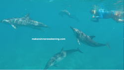 JK and Dolphins