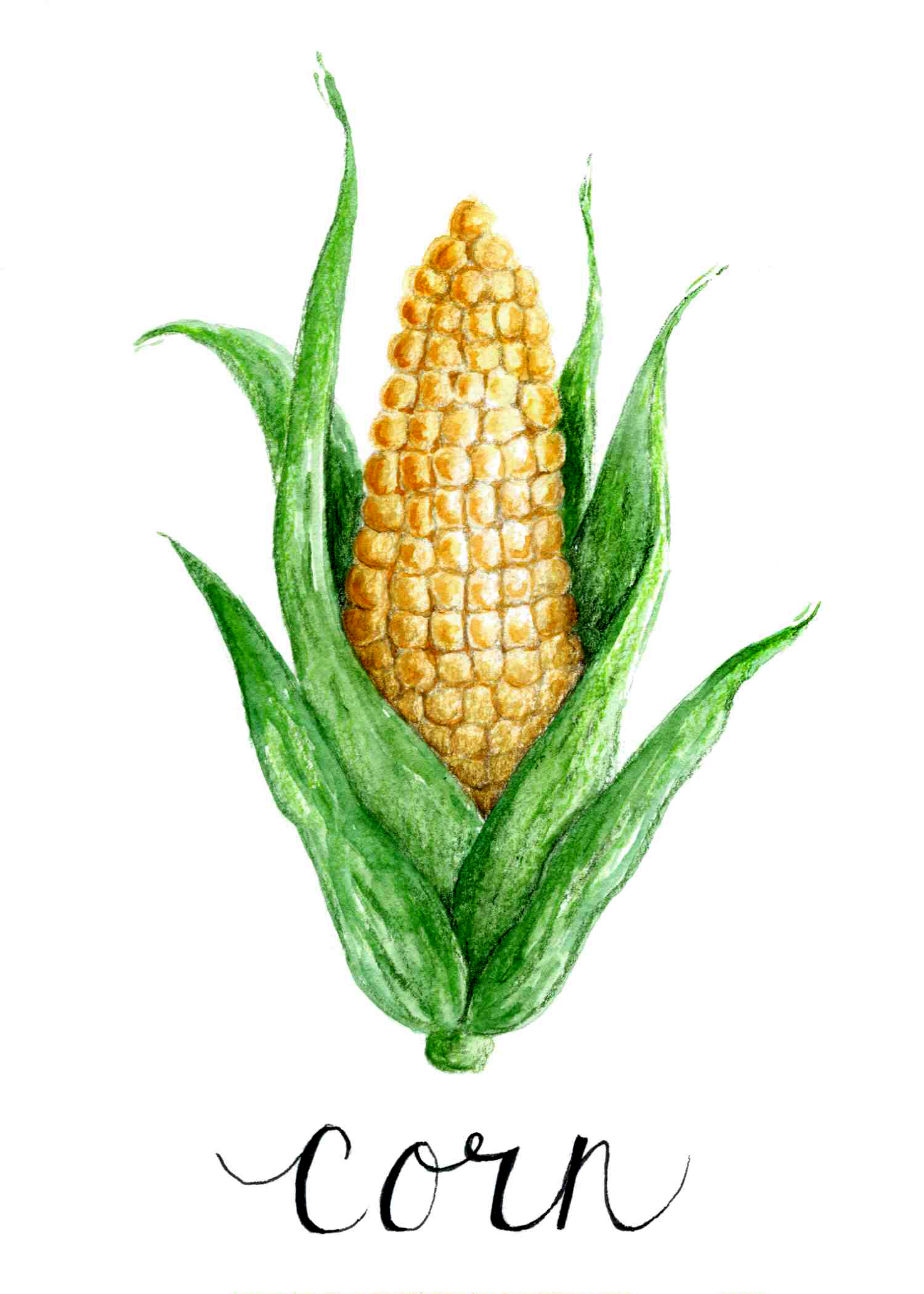 Veggie Series (Corn)