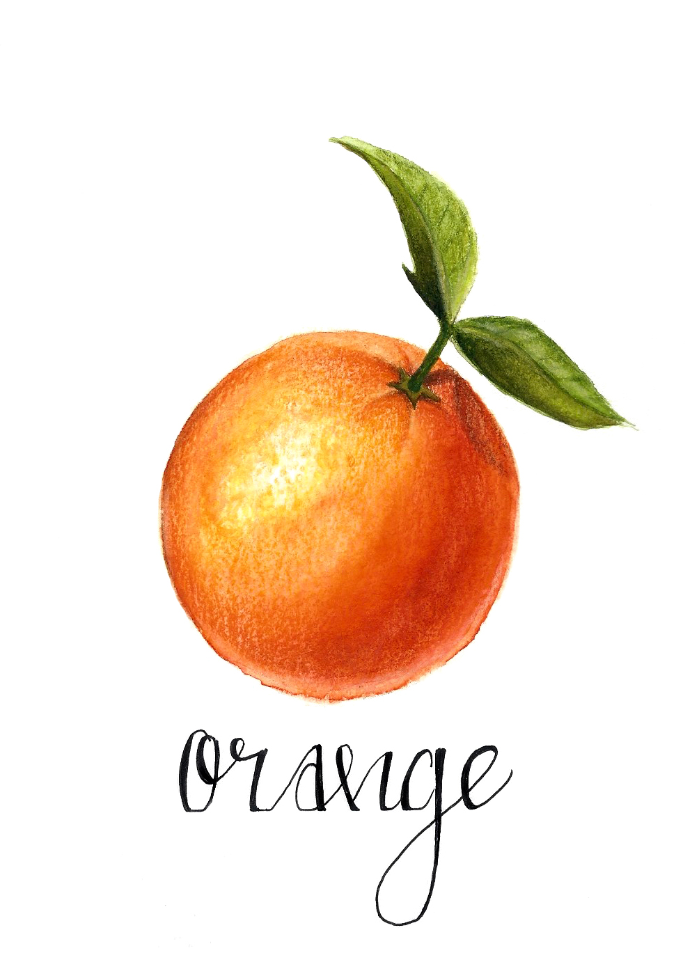Fruit Series (Orange)