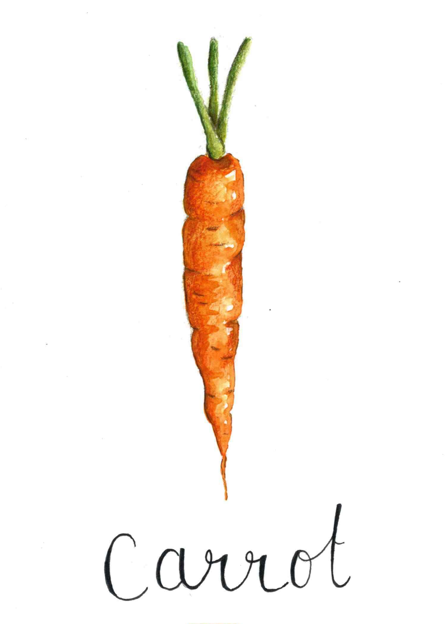 Veggie Series (Carrot)