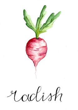 Veggie Series (Radish)