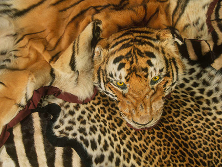 Trade and Commerce in Wild Animals