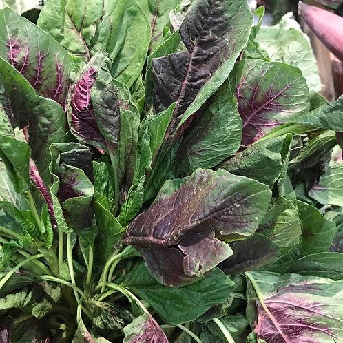 Red Amaranth/紅莧菜