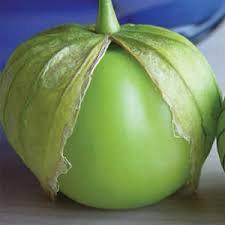 Tomatillo/粘果酸漿 seedlings