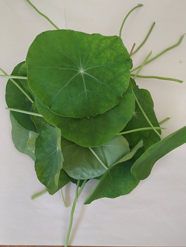 Nasturtium greens - 25g