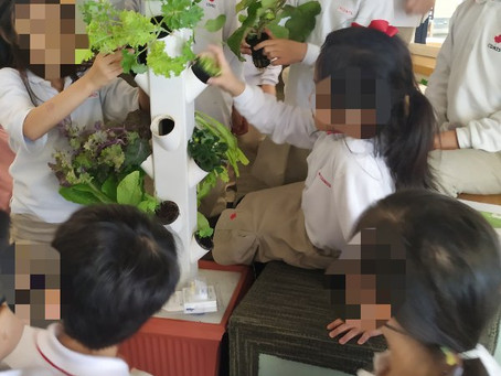Hong Kong's next gen hydroponic growers