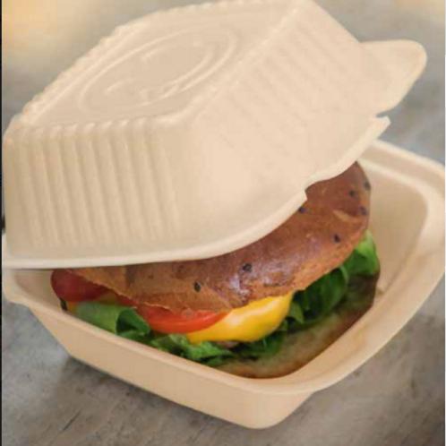 Almeja hamburguesera  caña de azúcar - 6 x 6