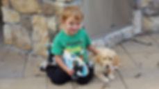labradoodles and children