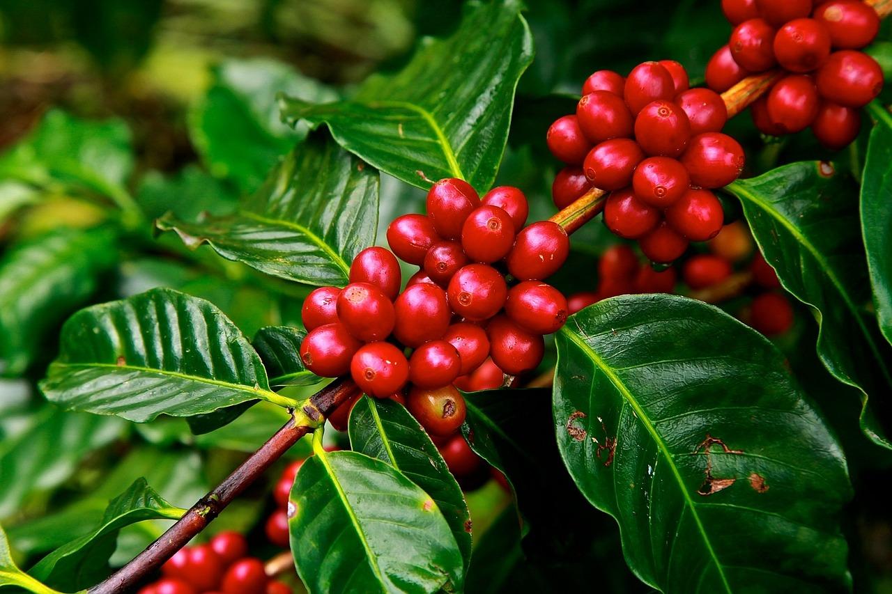 coffee-beans-1650788_1280