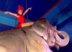 ElephantsGirlsriding.jpg