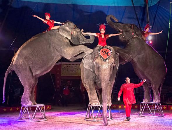 Elephants 3.jpg