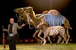 Running Camels.jpg