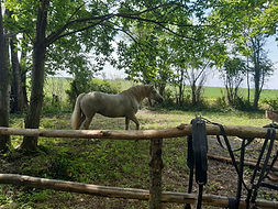 chalet cheval.jpg