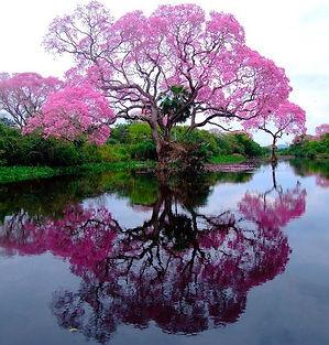 arbre-rose_edited.jpg