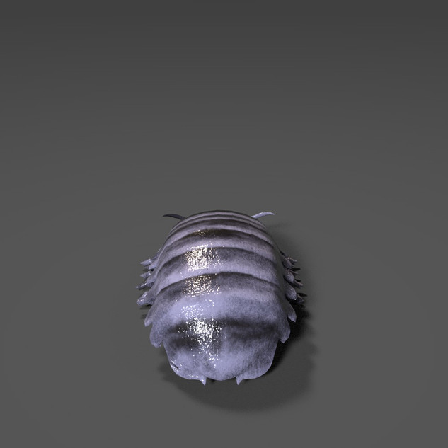 Giant Isopod view 3