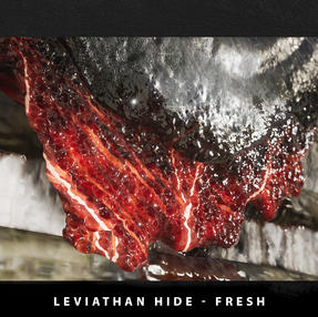 P3_Scalfano_LeviathanHideNEW_B.jpg