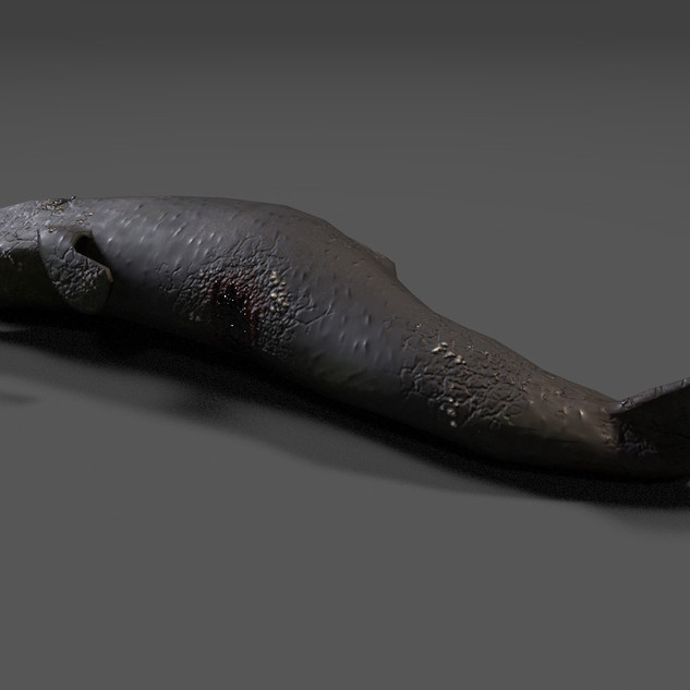 Deadfall Sperm Whale view 2