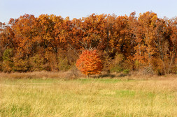 Fall ozark mo by andronicos
