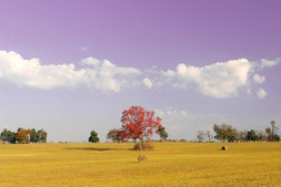 Red Tree Ozark MO by Andronicos