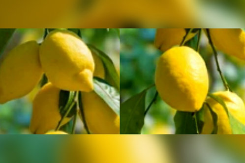 Lemon Drop Oil